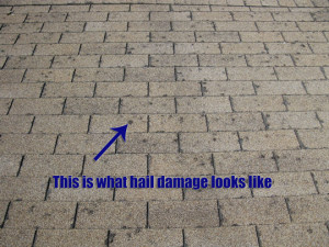 HAIL DAMAGE TO SHINGLES